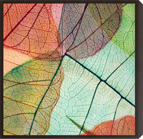 Colourful Leaves II